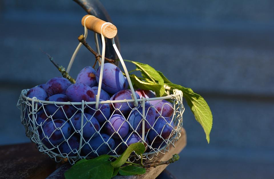 Sklizeň švestek je tradičně na podzim